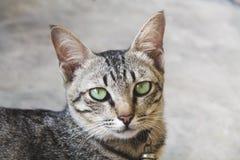 Portrait der netten Katze stockbild