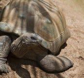 Portrait der Schildkröte Lizenzfreies Stockfoto