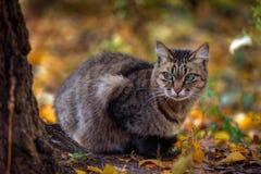 Portrait der Tabbykatze im Herbst Lizenzfreies Stockfoto