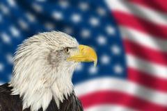 Portrait des amerikanischen kahlen Adlers gegen USA-Markierungsfahne Stockbilder