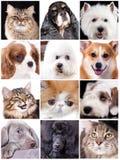 Portrait des animaux drôles, ensemble Photo libre de droits