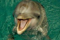 Portrait des Delphins Lizenzfreies Stockbild