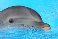 Portrait des Delphins Stockfotos