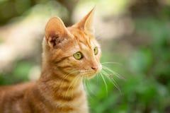 Portrait des Kätzchens lizenzfreie stockfotos