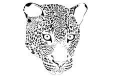 Portrait des Leoparden Stockbild