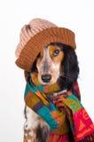 Portrait des netten Hundes mit Hut stockfotos