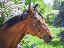 Portrait des netten Pferds nahe Blume Stockfoto