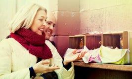 Portrait des oiseaux de alimentation de couples mûrs gais affectueux Photographie stock