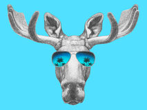 Portrait des orignaux avec des lunettes de soleil de miroir Photographie stock libre de droits