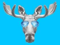 Portrait des orignaux avec des lunettes de soleil de miroir Photographie stock