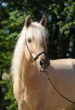 Portrait des Pferds stockfotos