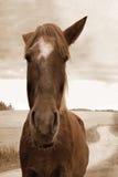 Portrait des Pferds Lizenzfreie Stockbilder