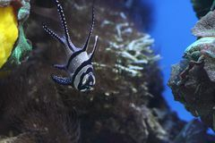 Portrait des poissons tropicaux Image stock