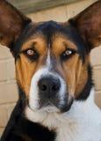 Portrait des schönen Hundes, Fokus auf Augen stockfotografie