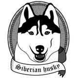 Portrait des sibirischen Schlittenhunds Lokalisierte Vektorhundillustration Lizenzfreie Stockfotografie