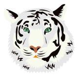 Portrait des Tigers auf weißem Hintergrund Stockbild