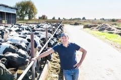 Portrait des vaches de alimentation à technicien vétérinaire à la ferme Image stock