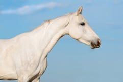 Portrait des weißen Pferds auf dem Himmelhintergrund Stockbilder