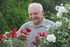 Portrait des Züchters der Rosen stockfotos
