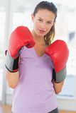 Portrait of a determined female boxer Stock Images