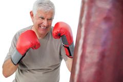 Portrait of a determined senior boxer. Over white background Royalty Free Stock Photo