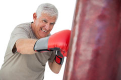 Portrait of a determined senior boxer. Over white background Stock Image
