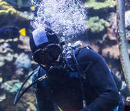Portrait of a diver Royalty Free Stock Photo