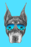 Portrait of Doberman Pinscher with mirror sunglasses. Hand drawn illustration Royalty Free Stock Photography