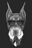 Portrait of Doberman Pinscher in suit. Royalty Free Stock Photography