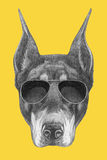 Portrait of Doberman Pinscher with sunglasses. Hand drawn illustration Royalty Free Stock Photography