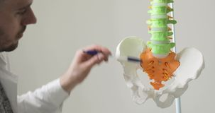 Doctor is pointing on pelvic bones and spine on spine anatomical model. Portrait of a doctor young man is pointing on pelvic bones and spine on spine anatomical stock footage