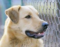 Portrait dog Stock Images