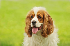 Portrait of dog royalty free stock images