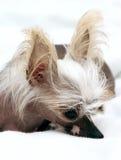 Portrait of dog Stock Image