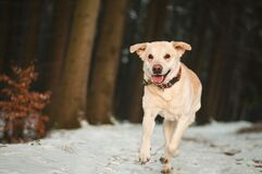 Portrait of Dog Stock Photography