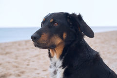 Portrait of a dog on the beach. stock photography