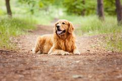 Portrait of a dog. Portrait of a beautiful dog outdoors royalty free stock photography