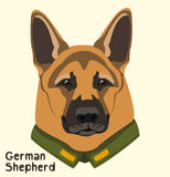 Portrait of a dog breed German Shepherd in the military jacket Stock Photography