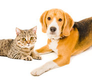 Portrait of a dog and a cat Stock Images