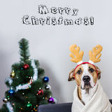 Portrait of dog in christmas reindeer headband in front of fur t stock photos