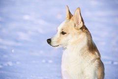 Portrait of a dog. Closeup. Royalty Free Stock Image