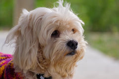 Portrait of dog. Closeup picture of face dog on blur background stock photos