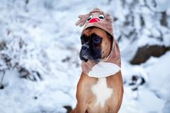 Portrait of dog in deer costume against background of Christmas trees. Stock Image