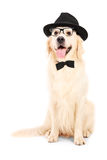 A portrait of dog dressed-up in bow tie hat and glasses Stock Photos
