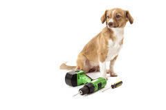 Portrait of dog with drill and screwdriver Royalty Free Stock Photos