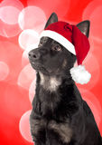 Portrait of a dog, a German Shepherd puppy Royalty Free Stock Photo