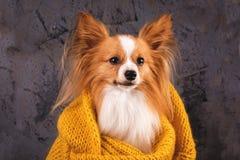 Dog in a sweater, close-up