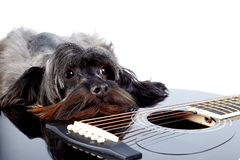 Portrait of a dog with a guitar Stock Photo