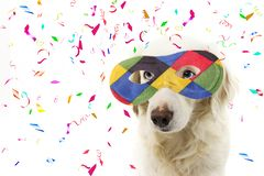 PORTRAIT DOG HARLEQUIN CARNIVAL MASK. FUNNY MIXED-BREED PUPPY WEARING A COLORFUL MASQUERADE. ISOLATED STUDIO SHOT ON WHITE. BACKGROUND WITH CONFETTI FALLING royalty free stock photo