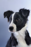 Portrait of dog Stock Images